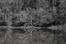 Around a lake 1
