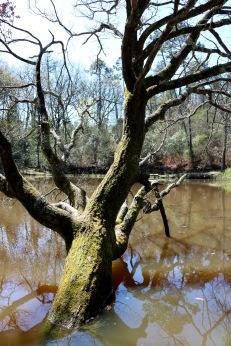 Around a lake 4