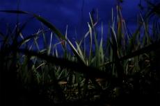 Light on grass 1