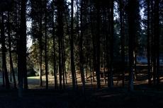 Luce tra gli alberi 1