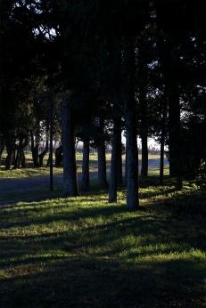 Luce tra gli alberi 2